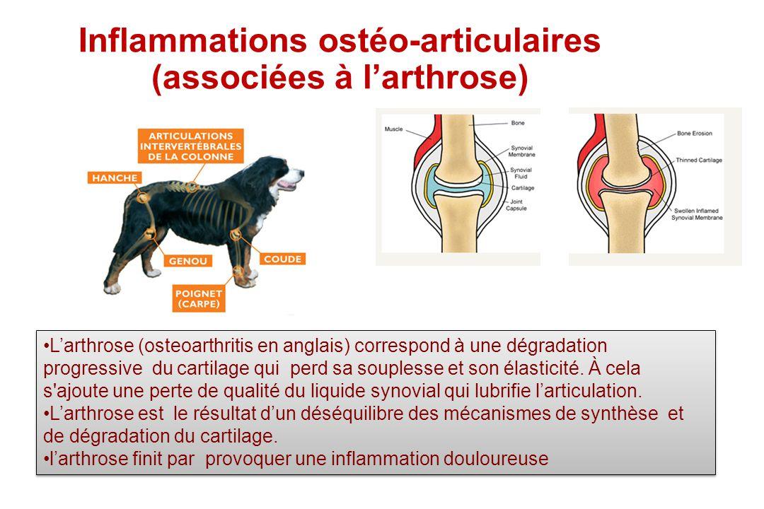 Inflammations ostéo-articulaires (associées à larthrose) Larthrose (osteoarthritis en anglais) correspond à une dégradation progressive du cartilage q