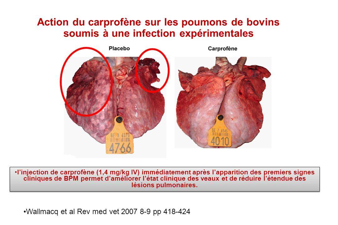 Action du carprofène sur les poumons de bovins soumis à une infection expérimentales Wallmacq et al Rev med vet 2007 8-9 pp 418-424 linjection de carp