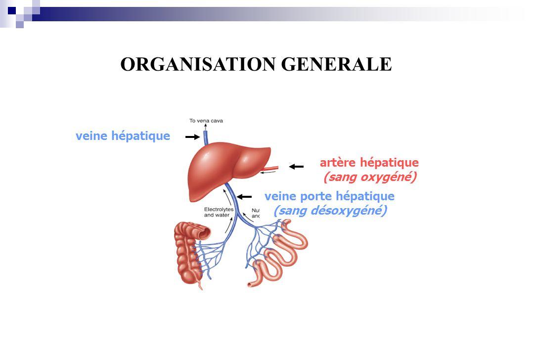 veine hépatique veine porte hépatique (sang désoxygéné) artère hépatique (sang oxygéné) ORGANISATION GENERALE