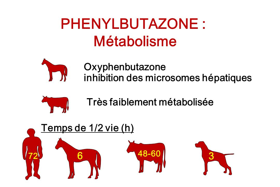 PHENYLBUTAZONE : Métabolisme Oxyphenbutazone inhibition des microsomes hépatiques Très faiblement métabolisée Temps de 1/2 vie (h) 72 6 48-60 3