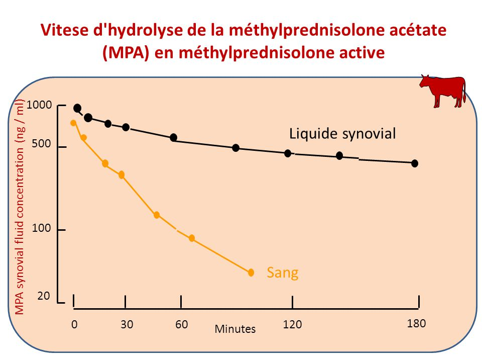 MPA synovial fluid concentration (ng / ml) 180 03060120 500 1000 100 20 Liquide synovial Sang Minutes Vitese d'hydrolyse de la méthylprednisolone acét