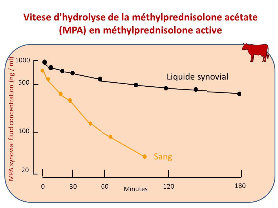 MPA synovial fluid concentration (ng / ml) 180 03060120 500 1000 100 20 Liquide synovial Sang Minutes Vitese d hydrolyse de la méthylprednisolone acétate (MPA) en méthylprednisolone active