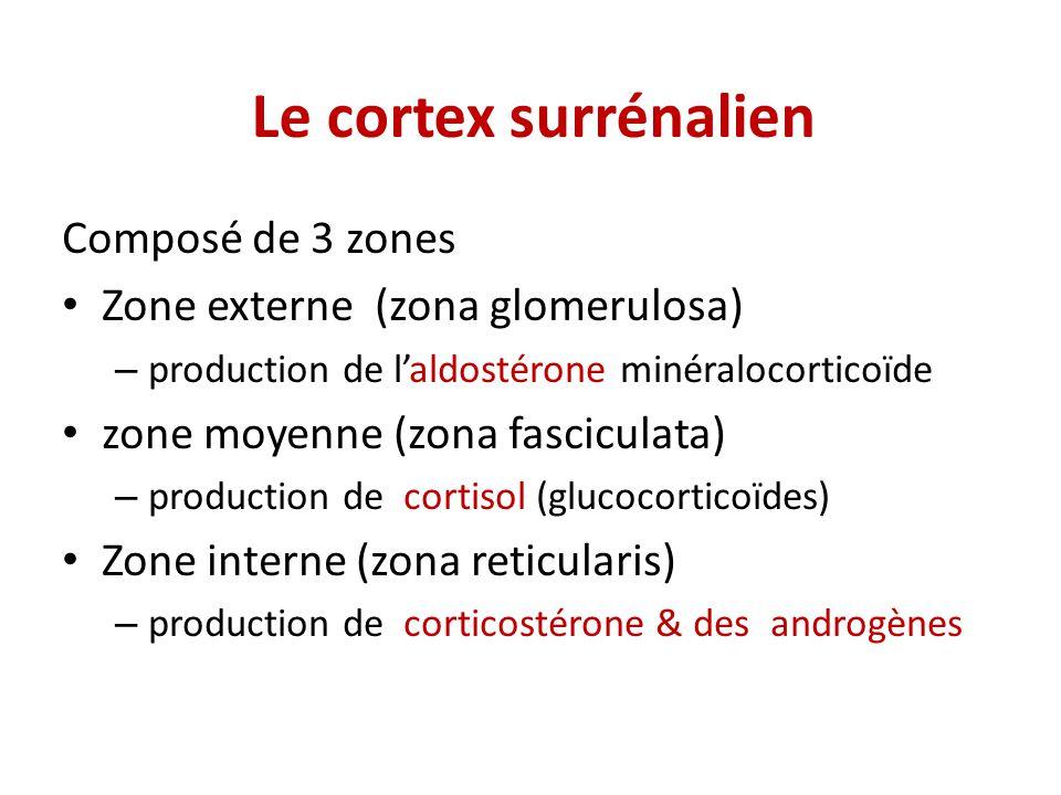 Le cortex surrénalien Composé de 3 zones Zone externe (zona glomerulosa) – production de laldostérone minéralocorticoïde zone moyenne (zona fasciculata) – production de cortisol (glucocorticoïdes) Zone interne (zona reticularis) – production de corticostérone & des androgènes