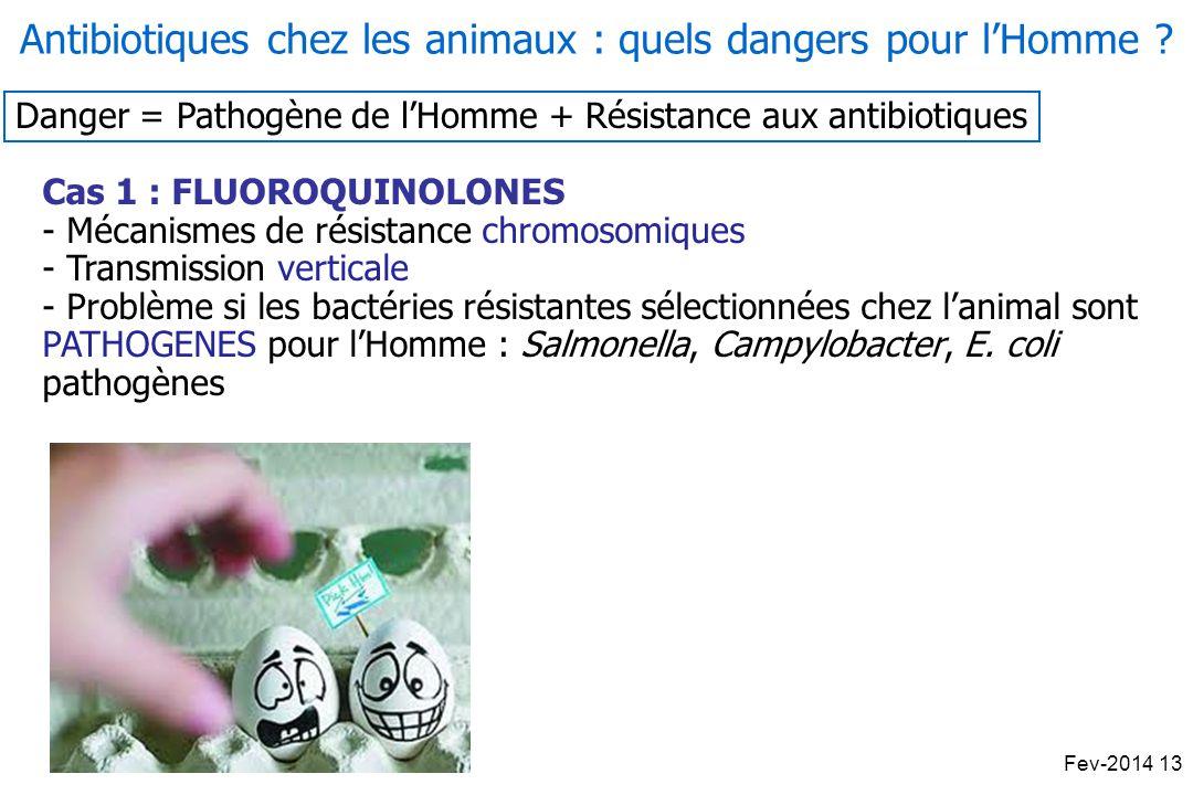 Danger = Pathogène de lHomme + Résistance aux antibiotiques Cas 1 : FLUOROQUINOLONES - Mécanismes de résistance chromosomiques - Transmission verticale - Problème si les bactéries résistantes sélectionnées chez lanimal sont PATHOGENES pour lHomme : Salmonella, Campylobacter, E.