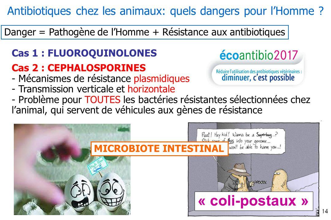 Fev-2014 14 Cas 1 : FLUOROQUINOLONES Cas 2 : CEPHALOSPORINES - Mécanismes de résistance plasmidiques - Transmission verticale et horizontale - Problème pour TOUTES les bactéries résistantes sélectionnées chez lanimal, qui servent de véhicules aux gènes de résistance Antibiotiques chez les animaux: quels dangers pour lHomme .