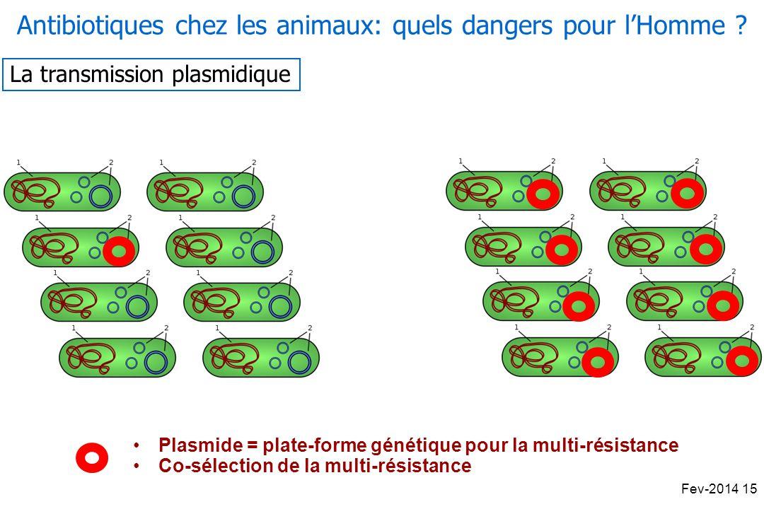 Antibiotiques chez les animaux: quels dangers pour lHomme .