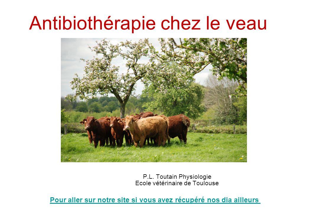 Antibiothérapie chez le veau P.L. Toutain Physiologie Ecole vétérinaire de Toulouse Update Janvier 2012 Pour aller sur notre site si vous avez récupér