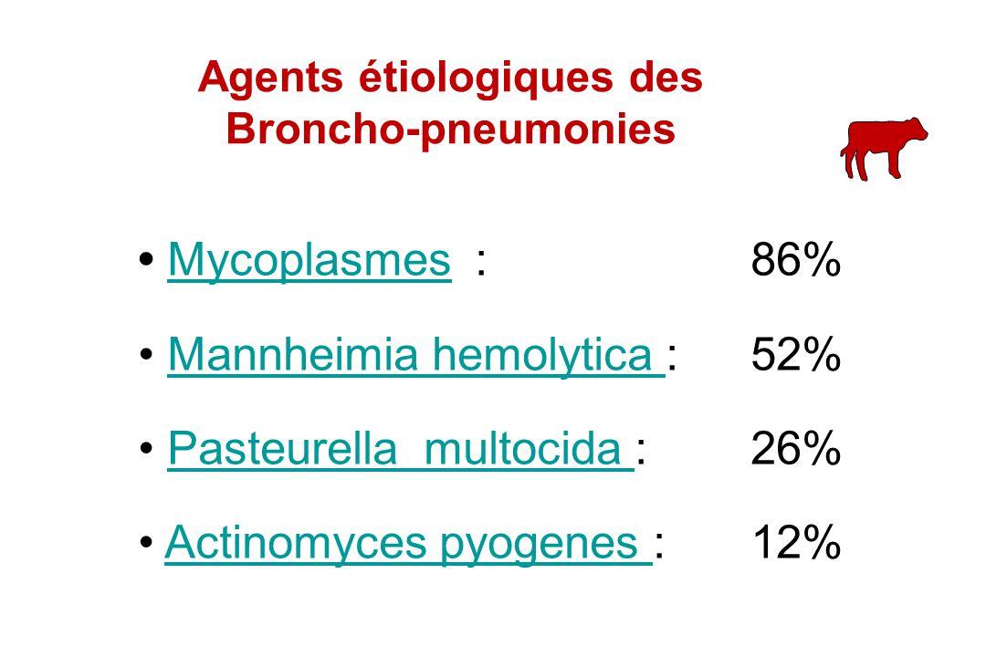 Mycoplasmes :86%Mycoplasmes Mannheimia hemolytica :52%Mannheimia hemolytica Pasteurella multocida :26%Pasteurella multocida Actinomyces pyogenes :12%A