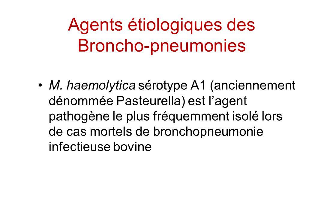 Agents étiologiques des Broncho-pneumonies M. haemolytica sérotype A1 (anciennement dénommée Pasteurella) est lagent pathogène le plus fréquemment iso