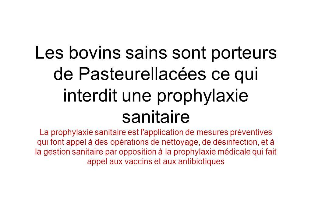 Les bovins sains sont porteurs de Pasteurellacées ce qui interdit une prophylaxie sanitaire La prophylaxie sanitaire est l'application de mesures prév