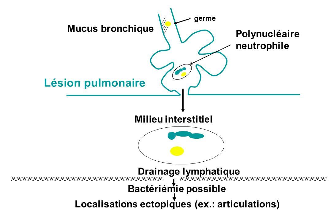 Mucus bronchique Milieu interstitiel Drainage lymphatique Bactériémie possible Localisations ectopiques (ex.: articulations) Lésion pulmonaire Polynuc