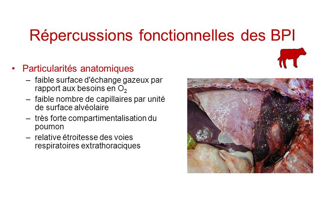 Répercussions fonctionnelles des BPI Particularités anatomiques –faible surface d'échange gazeux par rapport aux besoins en O 2 –faible nombre de capi