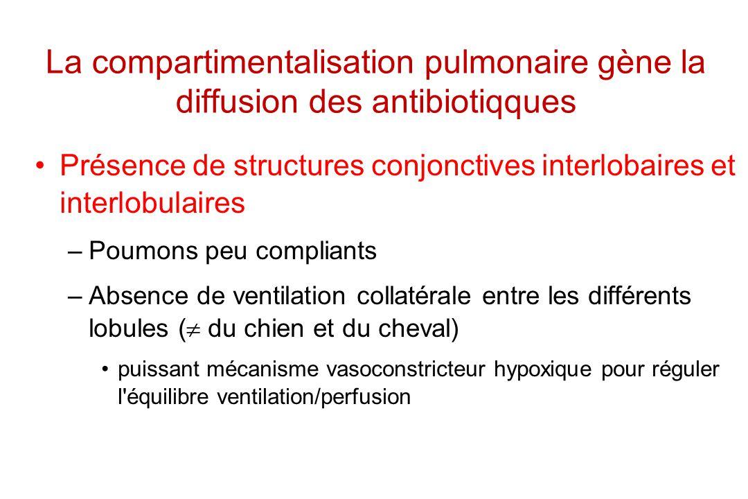 La compartimentalisation pulmonaire gène la diffusion des antibiotiqques Présence de structures conjonctives interlobaires et interlobulaires –Poumons
