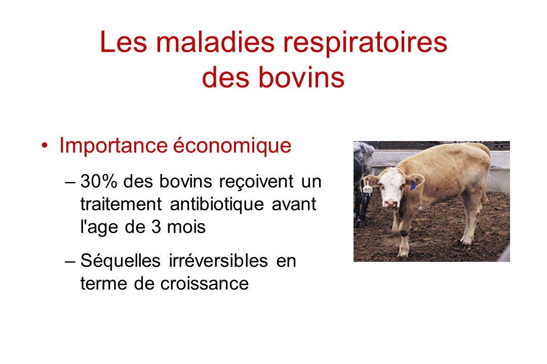 Les maladies respiratoires des bovins Importance économique –30% des bovins reçoivent un traitement antibiotique avant l'age de 3 mois –Séquelles irré