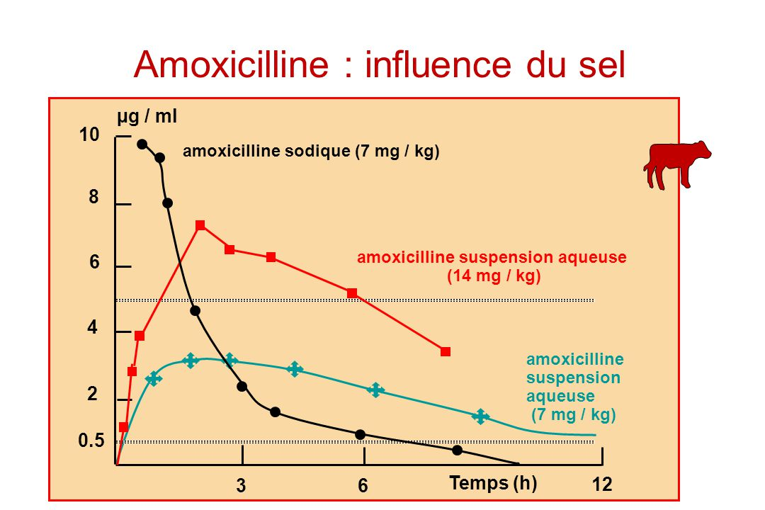 10 8 6 4 2 0.5 36 12 µg / ml Temps (h) amoxicilline sodique (7 mg / kg) amoxicilline suspension aqueuse (14 mg / kg) amoxicilline suspension aqueuse (7 mg / kg) Amoxicilline : influence du sel