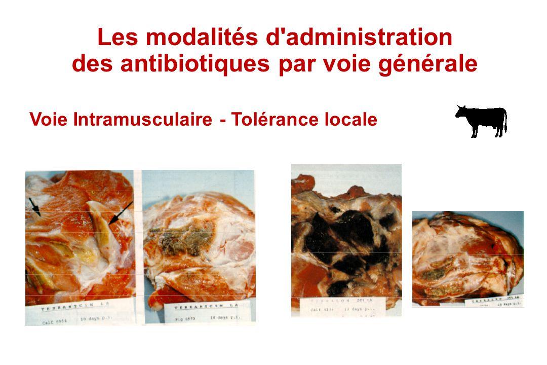 Les modalités d'administration des antibiotiques par voie générale Voie Intramusculaire - Tolérance locale