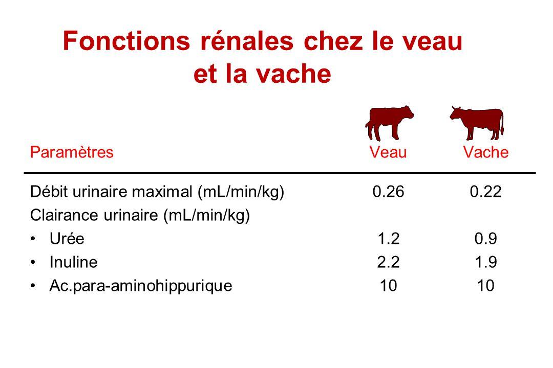Fonctions rénales chez le veau et la vache ParamètresVeauVache Débit urinaire maximal (mL/min/kg)0.260.22 Clairance urinaire (mL/min/kg) Urée1.20.9 In