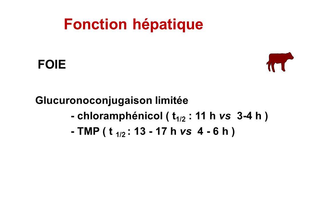 FOIE Glucuronoconjugaison limitée - chloramphénicol ( t 1/2 : 11 h vs 3-4 h ) - TMP ( t 1/2 : 13 - 17 h vs 4 - 6 h ) Fonction hépatique