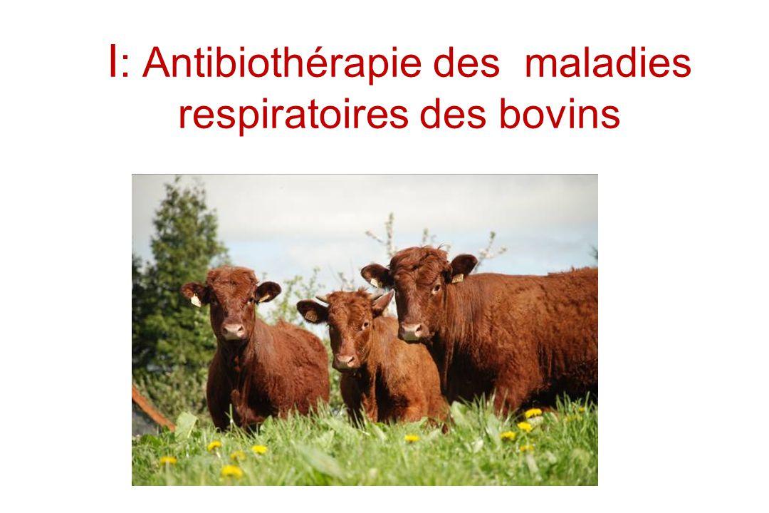 I : Antibiothérapie des maladies respiratoires des bovins