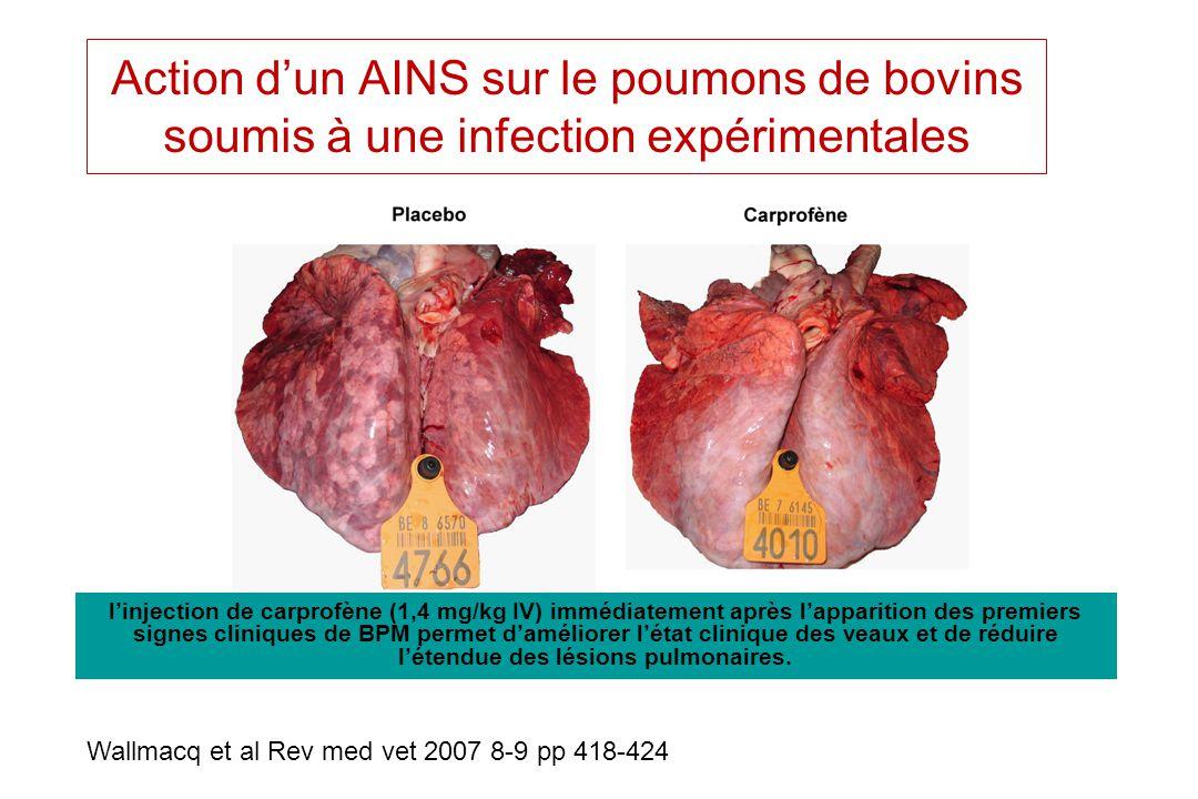 Action dun AINS sur le poumons de bovins soumis à une infection expérimentales Wallmacq et al Rev med vet 2007 8-9 pp 418-424 linjection de carprofène