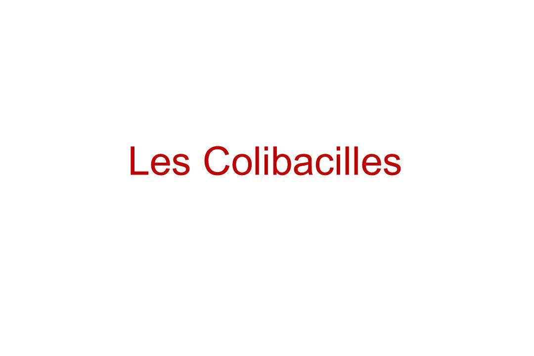 Les Colibacilles