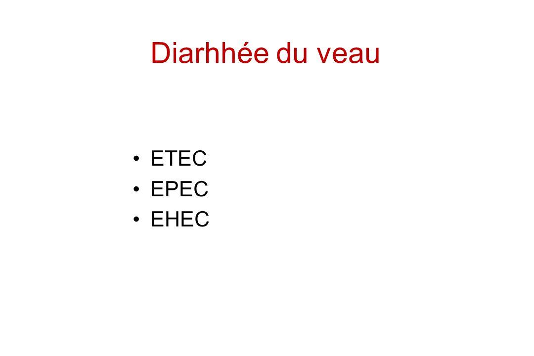 Diarhhée du veau ETEC EPEC EHEC