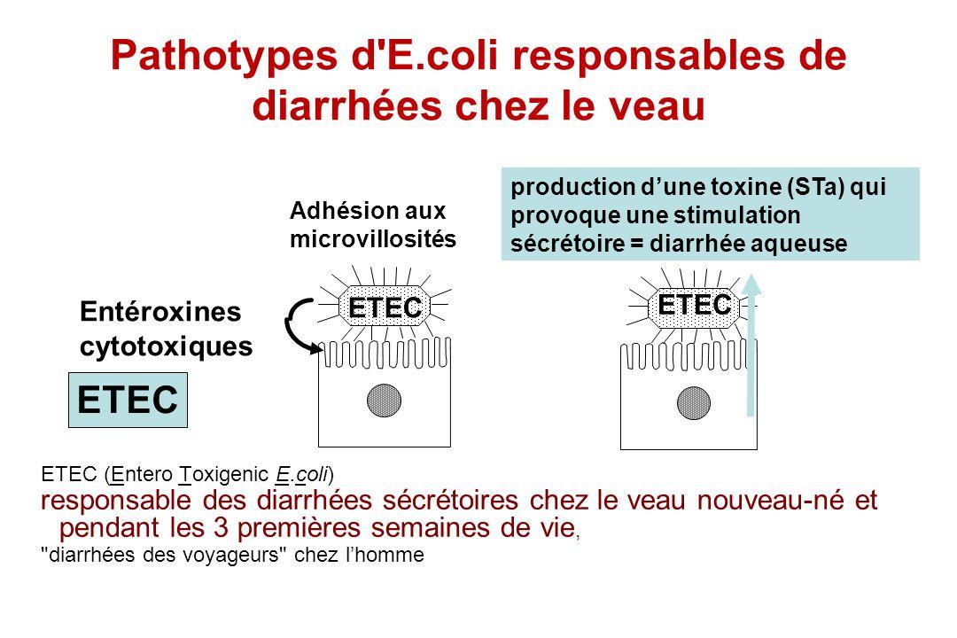 ETEC (Entero Toxigenic E.coli) responsable des diarrhées sécrétoires chez le veau nouveau-né et pendant les 3 premières semaines de vie,