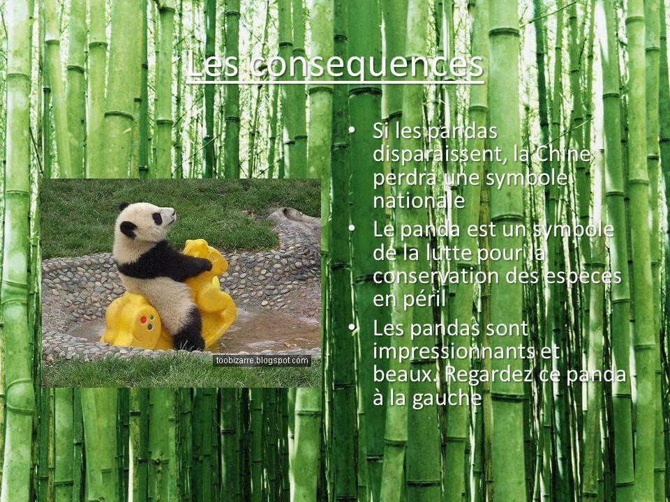 Les consequences Si les pandas disparaissent, la Chine perdra une symbole nationale Si les pandas disparaissent, la Chine perdra une symbole nationale