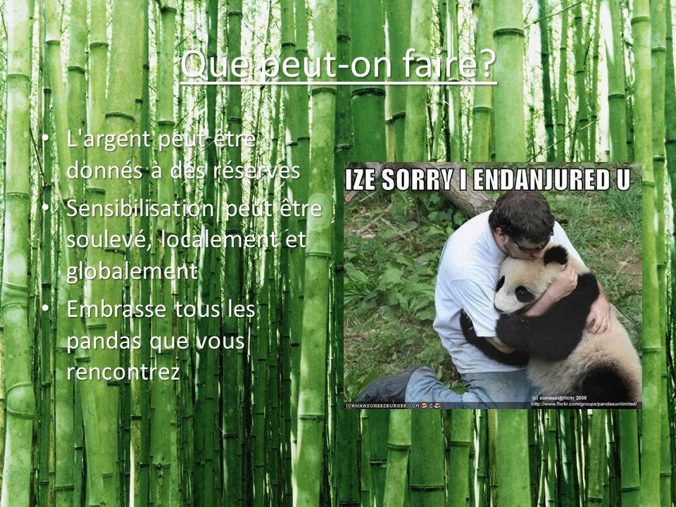 C est à nous de sauver les pandas... Afin qu ils puissent continuer à exercer le kung-fu