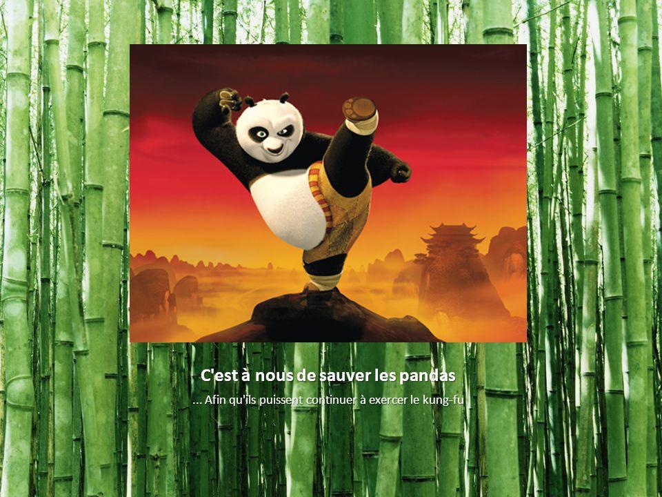 C'est à nous de sauver les pandas... Afin qu'ils puissent continuer à exercer le kung-fu