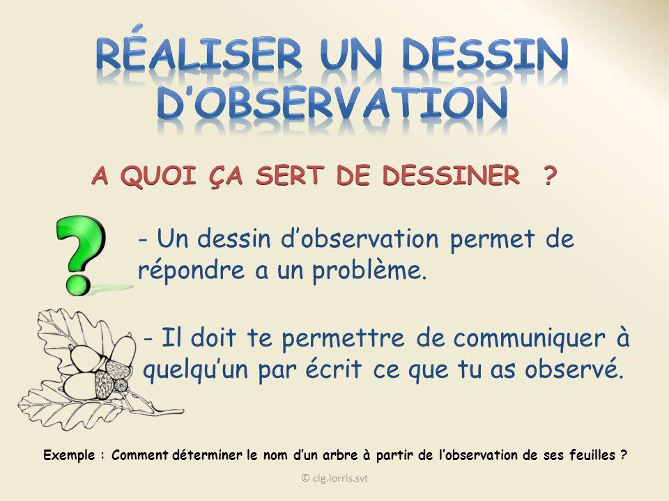 - Un dessin dobservation permet de répondre a un problème. - Il doit te permettre de communiquer à quelquun par écrit ce que tu as observé. Exemple :