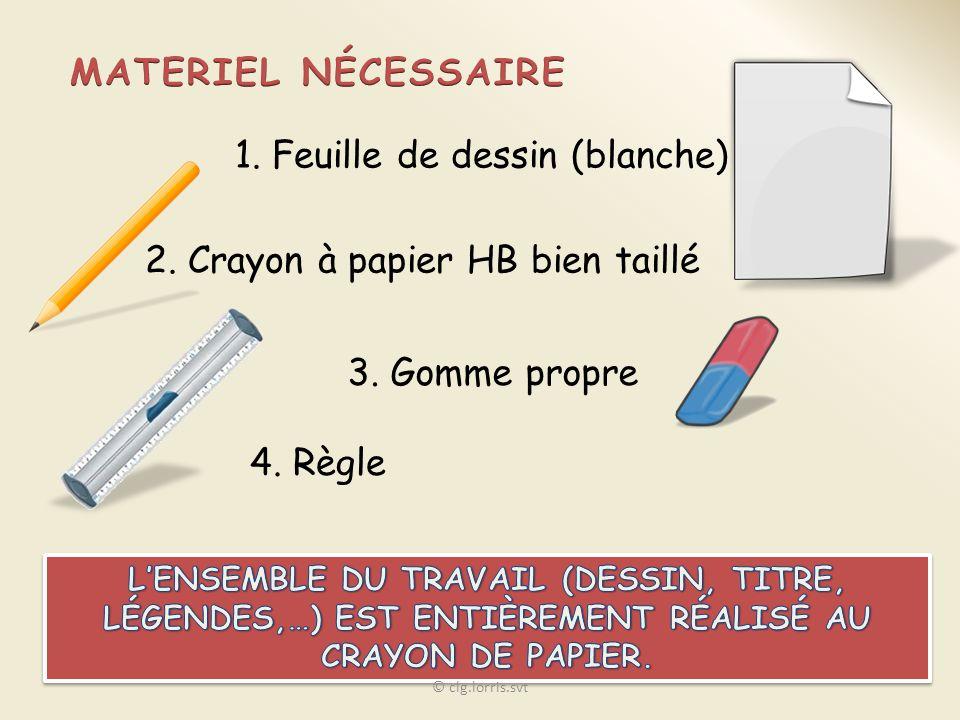 1. Feuille de dessin (blanche) 2. Crayon à papier HB bien taillé 3. Gomme propre 4. Règle © clg.lorris.svt