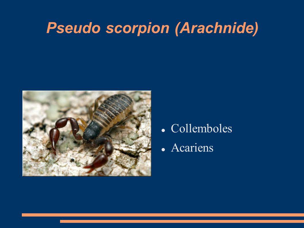 Pseudo scorpion (Arachnide) Collemboles Acariens