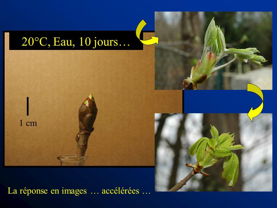 1 cm 20°C, Eau, 10 jours… La réponse en images … accélérées …