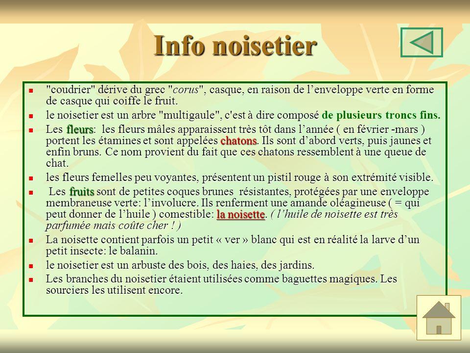 Info noisetier