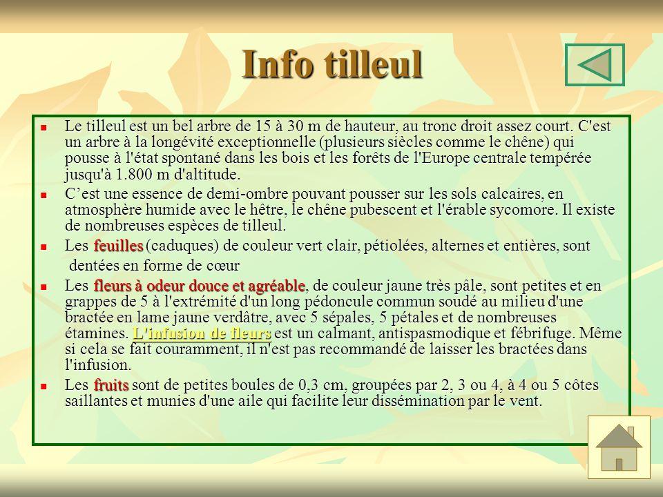 Info tilleul Le tilleul est un bel arbre de 15 à 30 m de hauteur, au tronc droit assez court. C'est un arbre à la longévité exceptionnelle (plusieurs