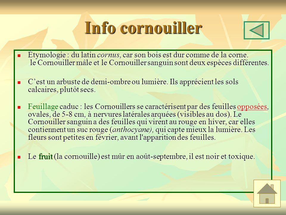 Info cornouiller Étymologie : du latin cornus, car son bois est dur comme de la corne. le Cornouiller mâle et le Cornouiller sanguin sont deux espèces