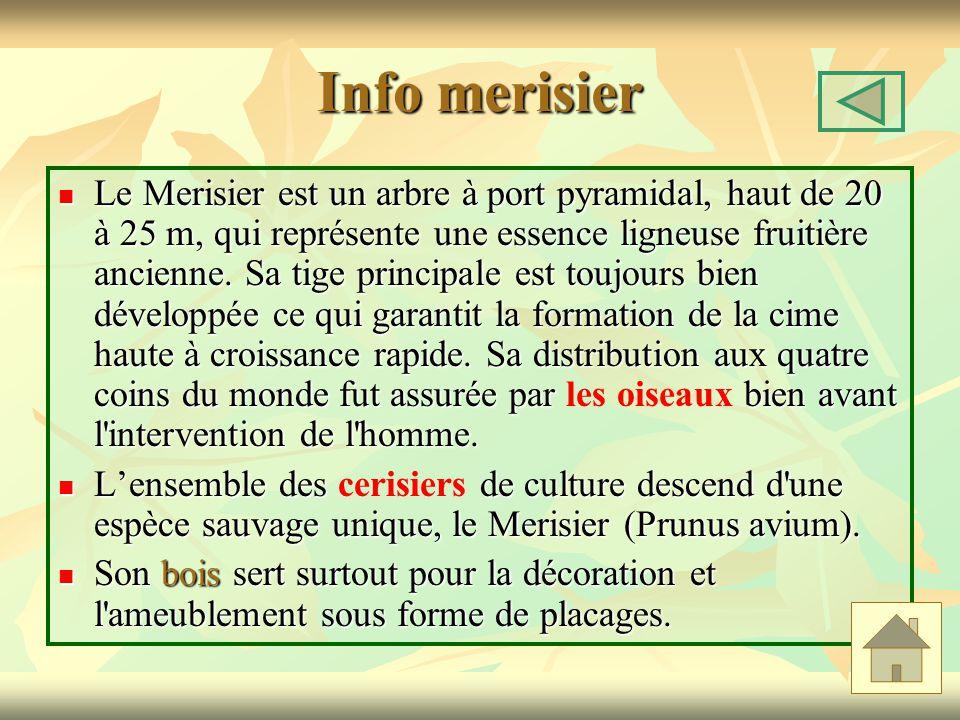 Info merisier Le Merisier est un arbre à port pyramidal, haut de 20 à 25 m, qui représente une essence ligneuse fruitière ancienne.