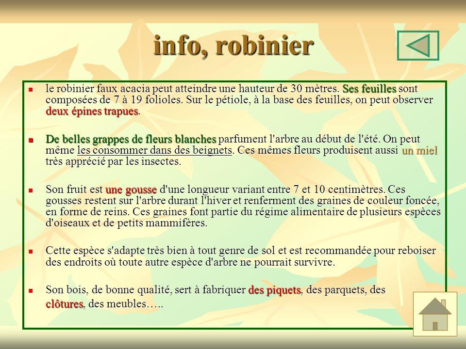 info, robinier le robinier faux acacia peut atteindre une hauteur de 30 mètres. Ses feuilles sont composées de 7 à 19 folioles. Sur le pétiole, à la b