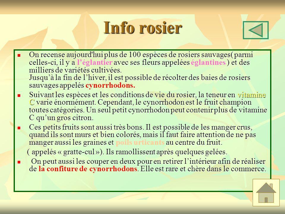 Info rosier On recense aujourd hui plus de 100 espèces de rosiers sauvages( parmi celles-ci, il y a avec ses fleurs appelées ) et des milliers de variétés cultivées.