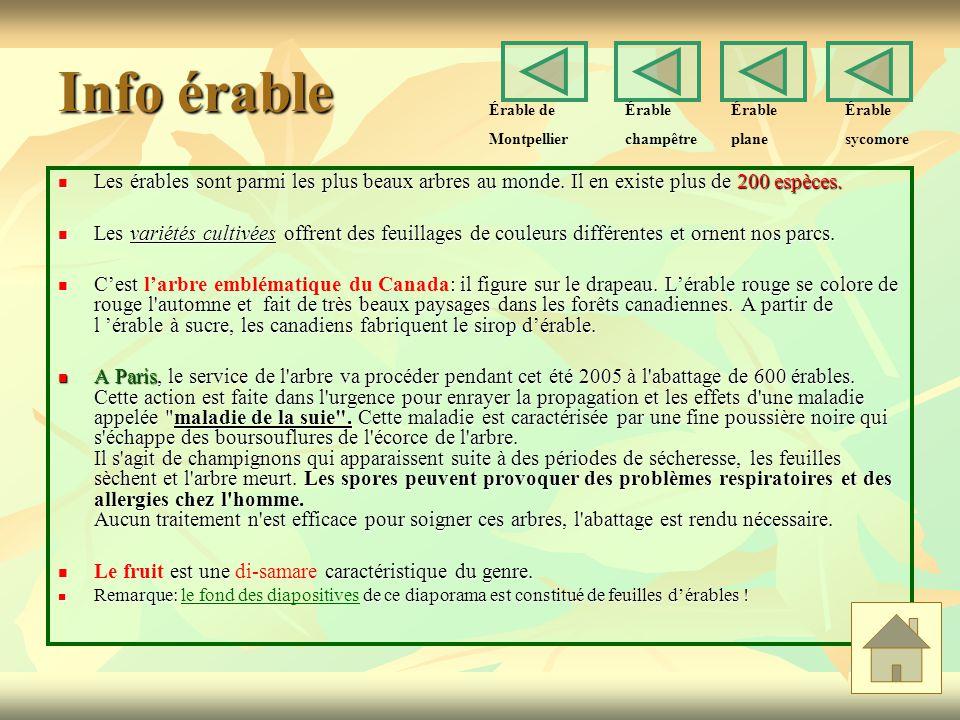 Info érable Les érables sont parmi les plus beaux arbres au monde.