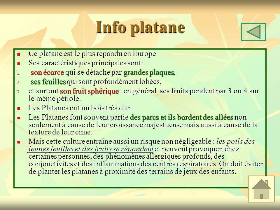 Info platane Ce platane est le plus répandu en Europe Ce platane est le plus répandu en Europe Ses caractéristiques principales sont: Ses caractéristiques principales sont: 1.