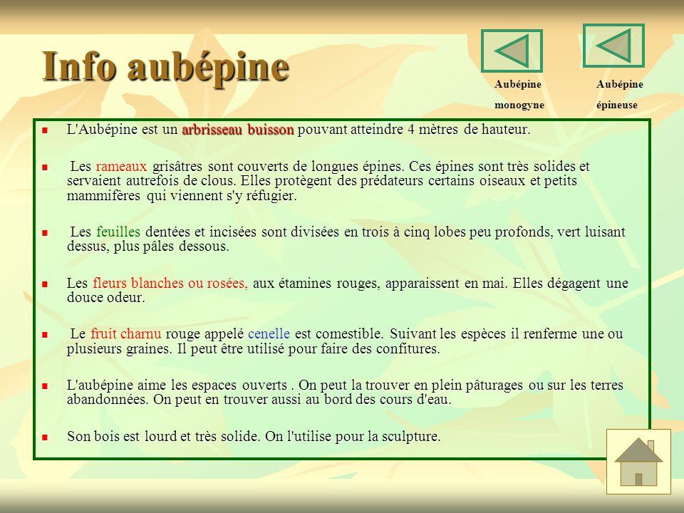 Info aubépine L'Aubépine est un arbrisseau buisson pouvant atteindre 4 mètres de hauteur. L'Aubépine est un arbrisseau buisson pouvant atteindre 4 mèt