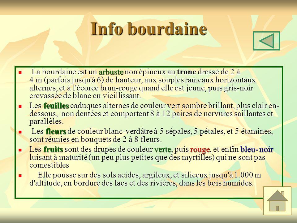 Info bourdaine La bourdaine est un arbuste non épineux au tronc dressé de 2 à 4 m (parfois jusqu'à 6) de hauteur, aux souples rameaux horizontaux alte