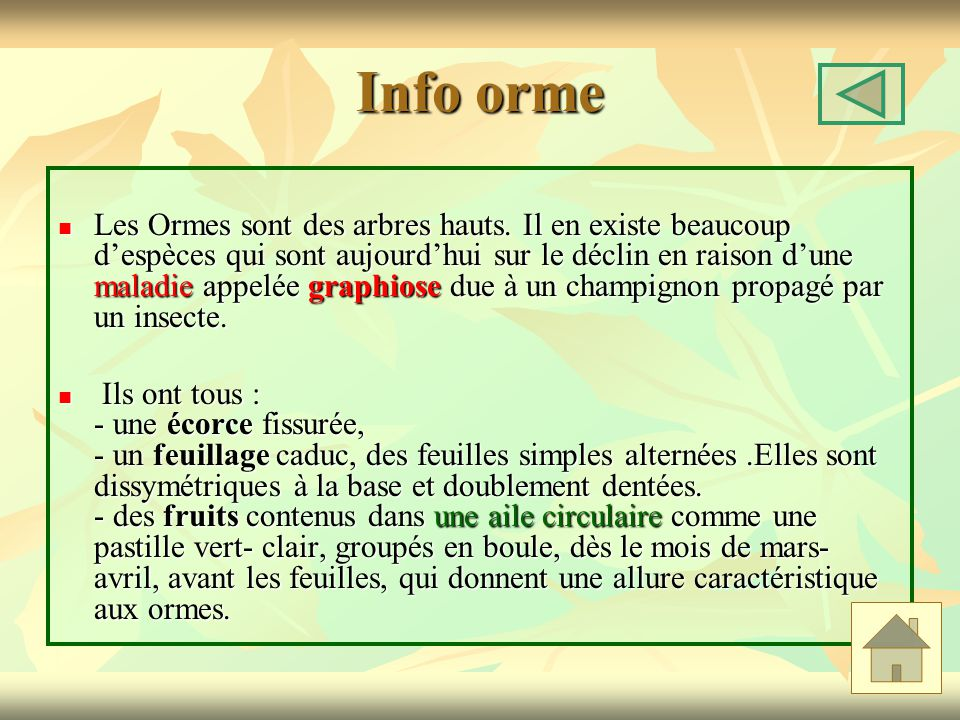Info orme Les Ormes sont des arbres hauts. Il en existe beaucoup despèces qui sont aujourdhui sur le déclin en raison dune maladie appelée graphiose d
