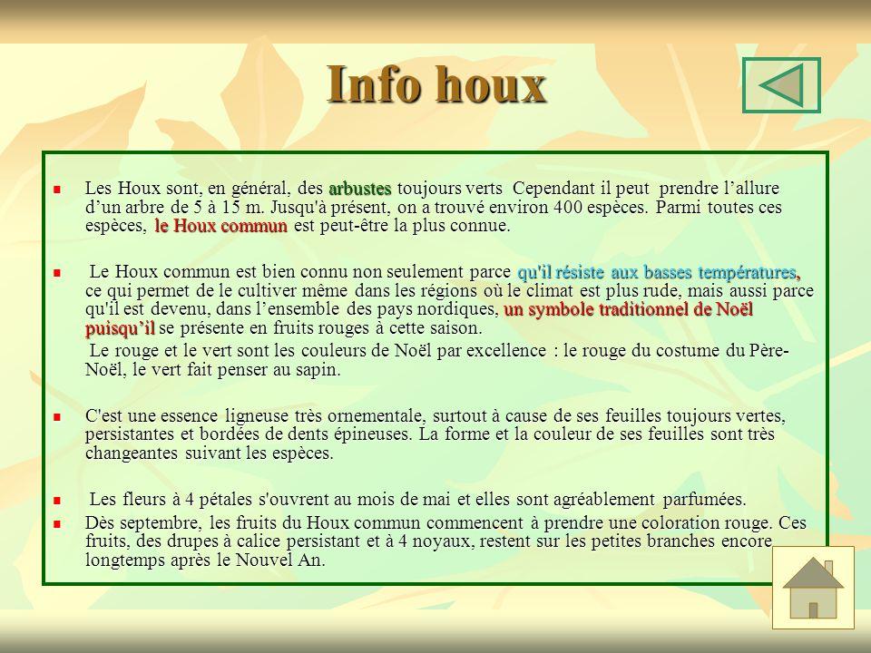 Info houx Les Houx sont, en général, des arbustes toujours verts Cependant il peut prendre lallure dun arbre de 5 à 15 m.