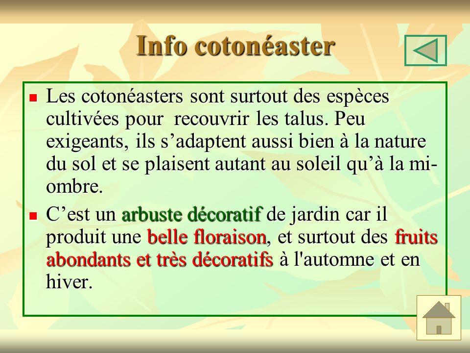 Info cotonéaster Les cotonéasters sont surtout des espèces cultivées pour recouvrir les talus. Peu exigeants, ils sadaptent aussi bien à la nature du