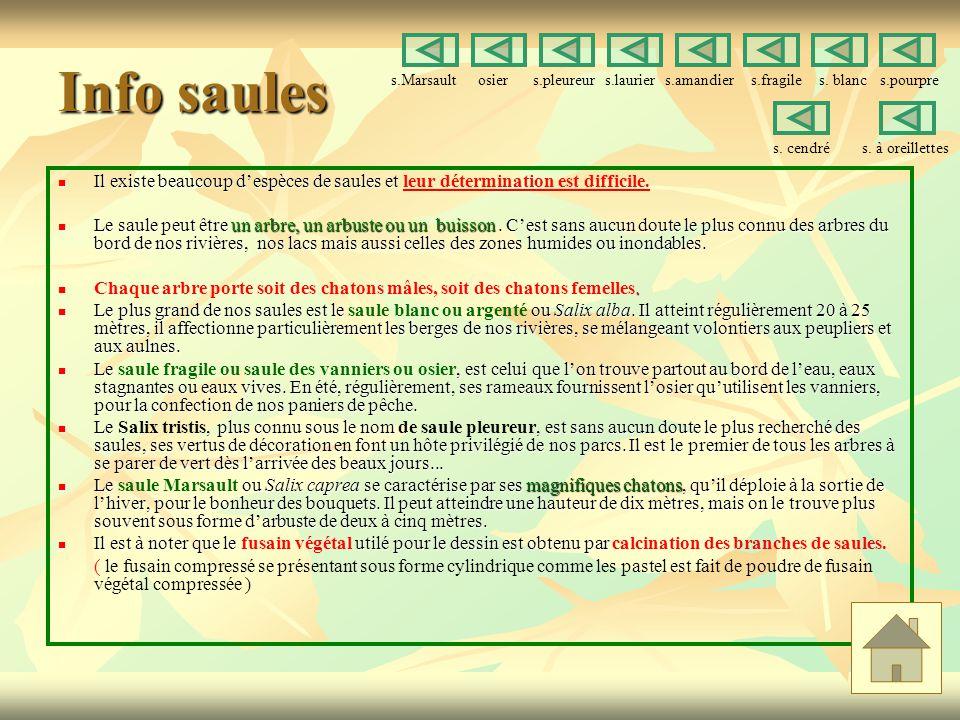 Info saules Il existe beaucoup despèces de saules et Il existe beaucoup despèces de saules et leur détermination est difficile.