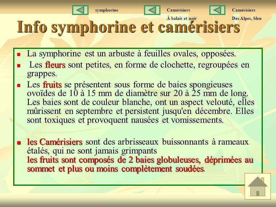 Info symphorine et camérisiers La symphorine est un arbuste à feuilles ovales, opposées. La symphorine est un arbuste à feuilles ovales, opposées. Les