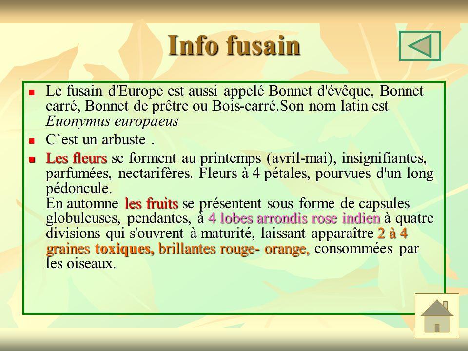 Info fusain Le fusain d'Europe est aussi appelé Bonnet d'évêque, Bonnet carré, Bonnet de prêtre ou Bois-carré.Son nom latin est Euonymus europaeus Le